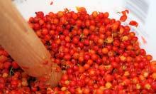 Mashing rowanberries