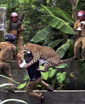 24 hours in pictures: A leopard attacks a forest guard in India