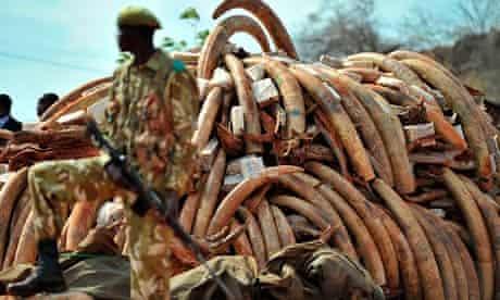Kenya's illegal ivory trade