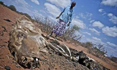 Bishar Hassim stands over a dead cow in Jowhar village, in Wajir, Kenya