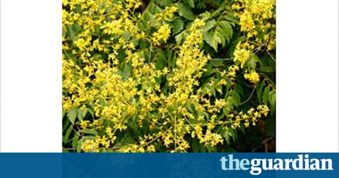 Gardens summer flowering trees life and style the for Garden trees b q