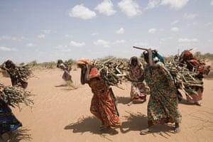 Dadaab: Wood collecting