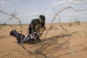 Dadaab: Mother collects wood