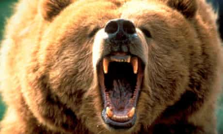 Grizzly bear attacks teenagers