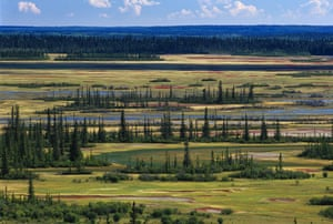 Canada Parks: Salt Plains and Boreal Forest