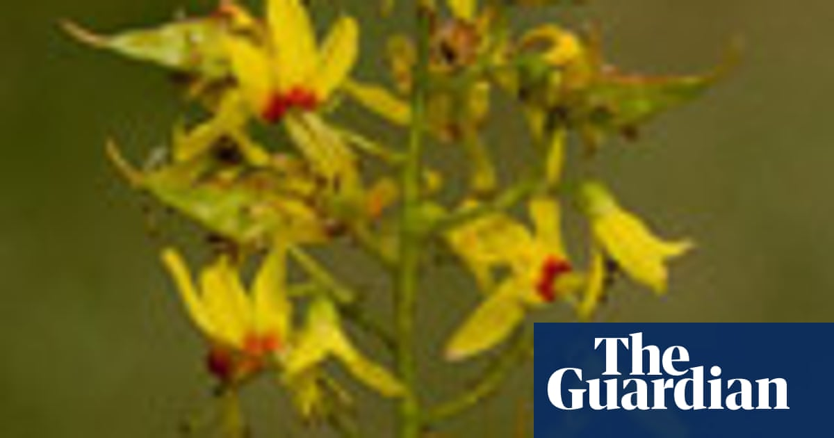 Gardens Summer Flowering Trees Life And Style The Guardian