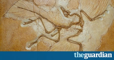 'Oldest bird' Archaeopteryx knocked off its perch in ...