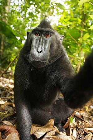 Macaque photos: One of the photos taken by a monkey using an unmanned camera