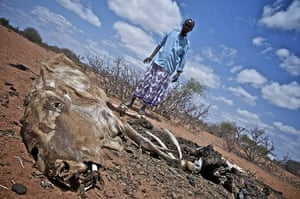 East Africa food crisis: drought and Somali refugees in Kenya