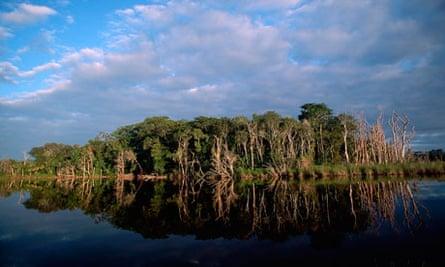 guatemala deforestation trees