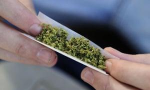 A man rolls a cannabis joint