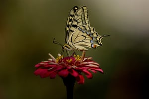 24 hours in pictures: A butterfly on a flower , Athens