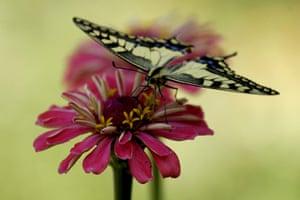week in wildlife: A butterfly alights