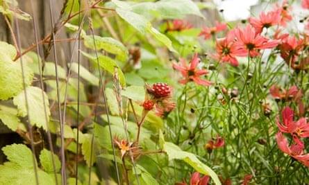 Gardens: Forest gardens