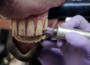 24 Hours: A dentist polishes the teeth of a horse in Bogota