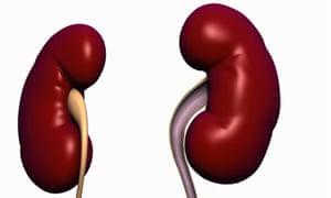 Kidneys and ureter