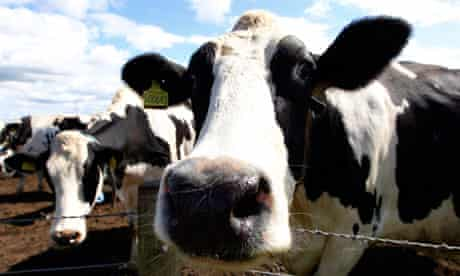 A Dutch company is linking cows to the internet to track their movements and eating habits.