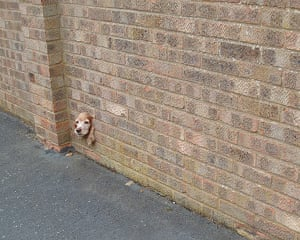 In pictures: Gap: Dog sticking head through wall