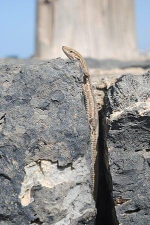 In pictures: Gap: lizard