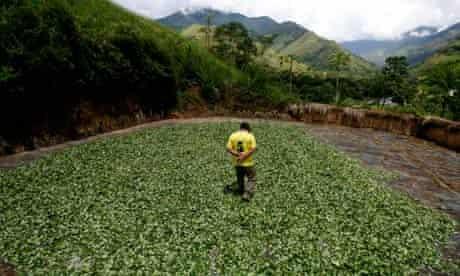 A coca farmer in Tingo María, Peru