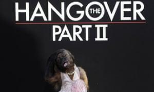 """The Hangover Part II"" Los Angeles Premiere - Arrivals"