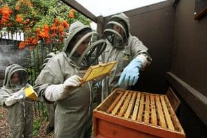Bee-keeping club: honey