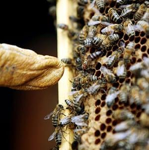 Bee-keeping club: Queen Bee