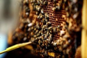 Bee-keeping club: more bees