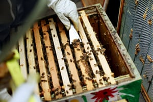 Bee-keeping club: opening the hive