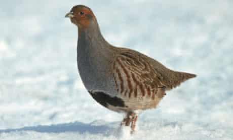 Europe's farmland birds on decline