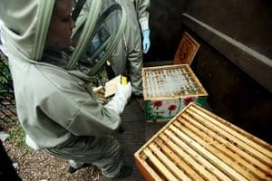 bees: bee-keeping