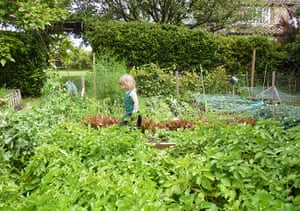 Week in pics: Rob da Bank: vegetable patch