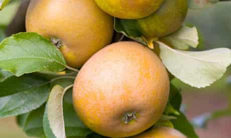 Alys Fowler: Apples