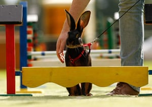 24 hours: Rommerz, Germany: A pet rabbit is led through an obstacle course