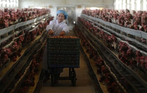 24 hours: Changzhi, China: A worker collects eggs at a poultry farm