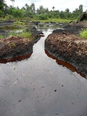 NIger Delta: The impact of an oil spill near Ikarama, Bayelsa State