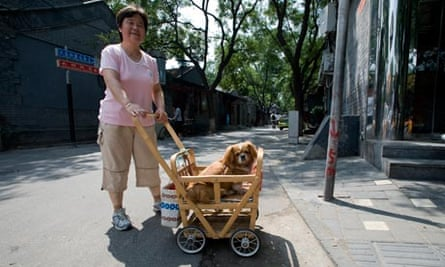 chinese city bans dogs