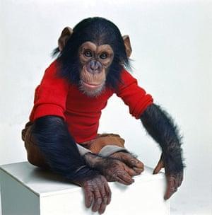 Project Nim: Chimp representing Nim Chimpsky in Project Nim