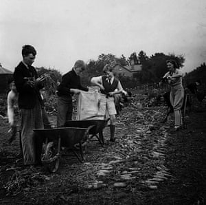 You can help your country: Picking carrots in Cheltenham