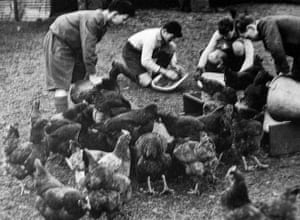 You can help your country: Students feeding hens, 1941