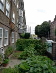 Growing food on Teale Street, Hackney