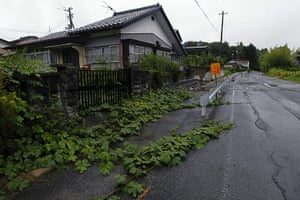 Week in wildlife:  ivy grows over a street in Tomioka town, Fukushima