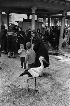 Vintage Istanbul: 1958, Stork and people in the courtyard of the Eyüp Sultan tombs