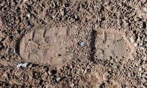 A footprint in soil