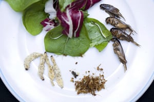 Edible insects: Edible insects 2
