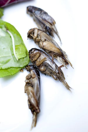 Edible insects: Edible insects 4