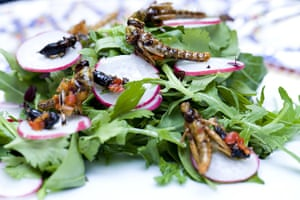 Edible insects: Edible insects 6