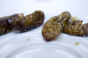 Edible insects: Edible insects 15