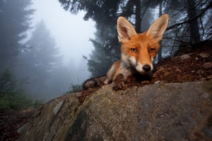 GDT Ewpy 2011: Fritz Pölking Award : the story about the fox Sophie