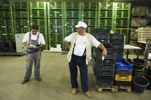 FTA: Attila Balazs: Shift-manager and farm-owner speak at the farm's cold warehouse
